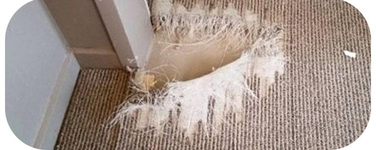 Best Carpet Repair Richmond