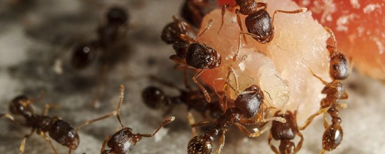 Best Pest Control Richmond